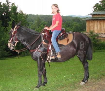 Saddle Fitting Mules - Crest Ridge Saddlery, LLC
